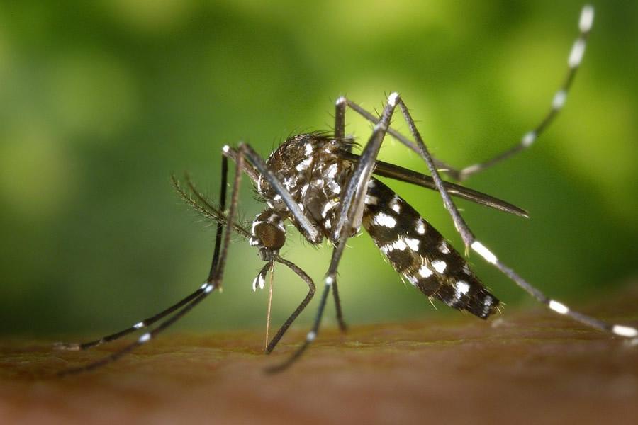 Zanzara Tigre: Tecniche di Controllo